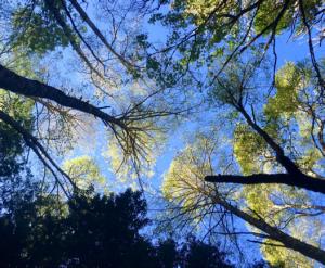 treeses